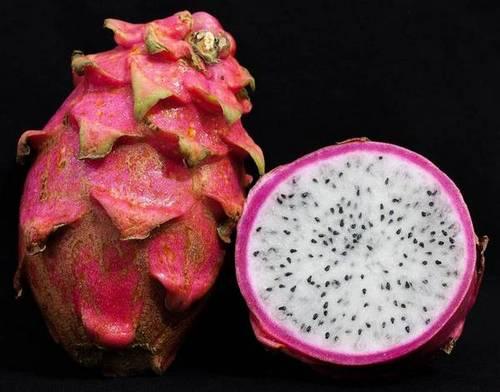 Плоды гилоцереуса волнистого (питахайя) фото