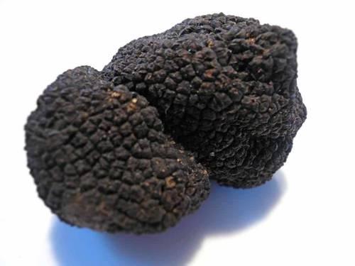 Черный гималайский трюфель