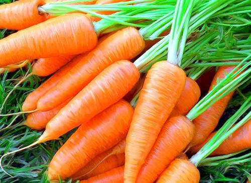 Сочная морковь