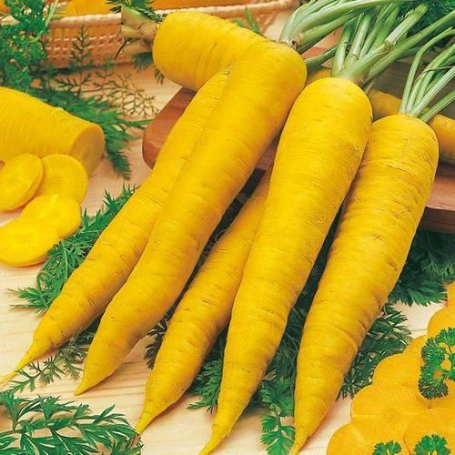 Сорт моркови Йеллоустоун