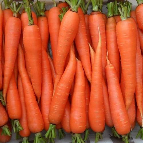 Поздняя морковь